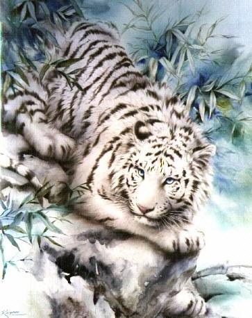 Tigre du bengal - Tigre blanc dessin ...