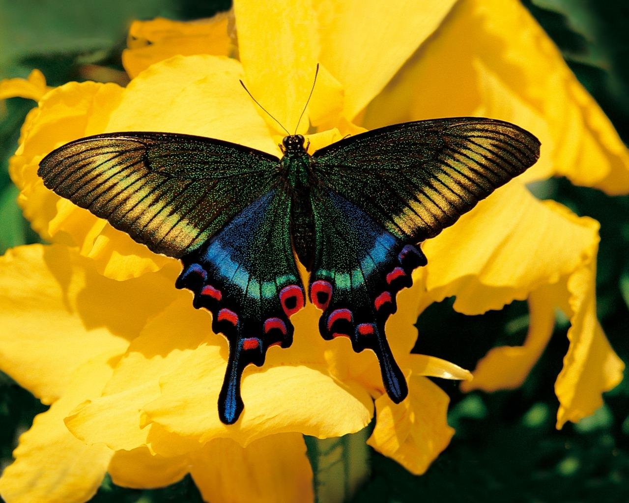 Papillon - Images de papillon ...